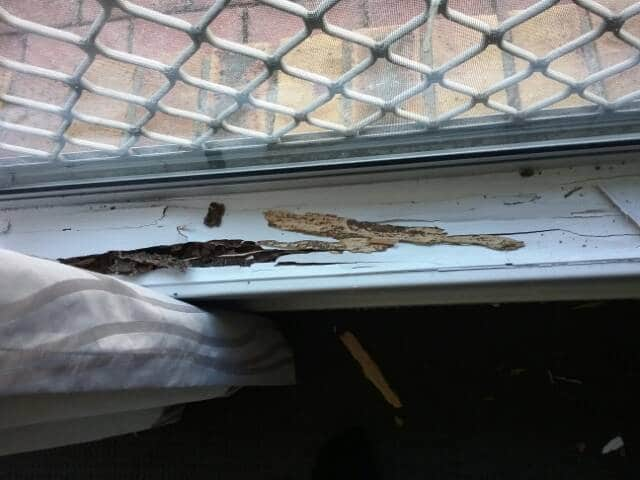 Active termites to a window sill